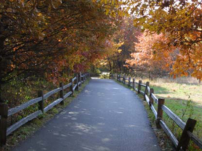 Path in Springbrook between two fences with trees in autumn fall colors